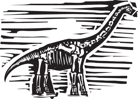 saurian: Woodcut style image of a fossil of a long necked Apatosaurus or brontosaurus dinosaur