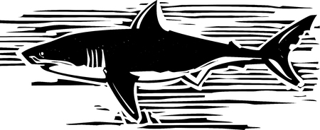 white teeth: Woodcut style image of a great white shark