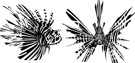 Woodcut style image of a tropical lionfish from the front and side Illustration