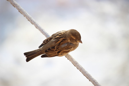 froze: Sparrow which froze
