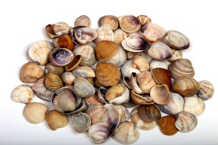 sea shells isolated on a white background