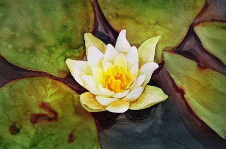 Original watercolor. Lily on the water. Stock fotó
