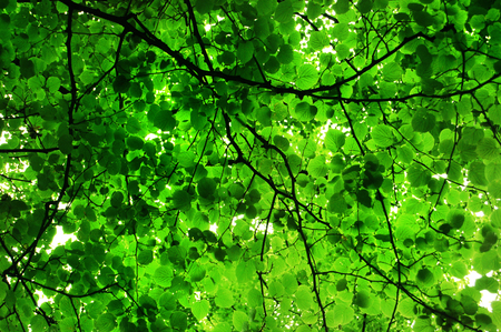 Background of leaves Stock fotó