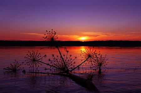 Sunset on the lake. Summer