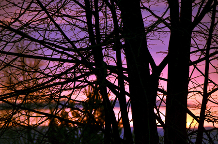 Sunset on a background of trees