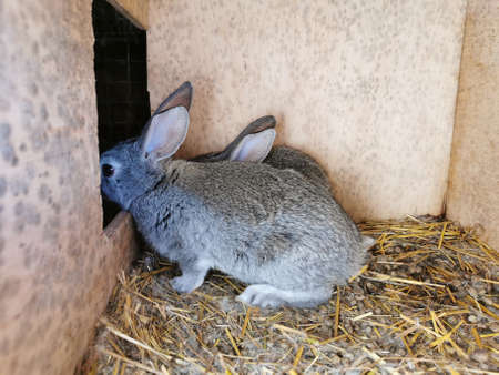 rabbit in cage gray farming livestock small