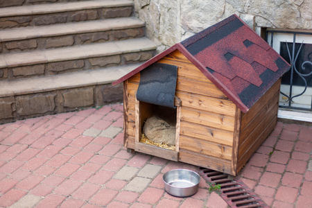 Nice solid wooden doghouse without a dog settled close to the house, with an empty bowl, outdoors, summer time. Red roof. Copy space