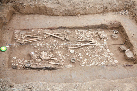 rchaeological excavations. Human remains (bones, skeleton and skull) in the ground. Real digger process. Outdoors, copy space, close up. Imagens