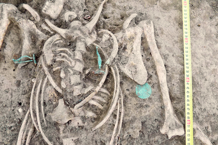 Archaeological excavations. Human remains (bones of skeleton, skulls) found in the tomb (aquamarine bijou, pendants, supposedly copper). Real digger process. Outdoors, copy space, close up.
