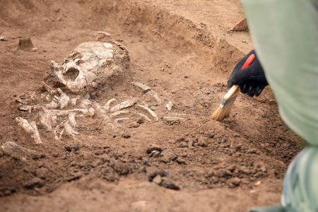 Archaeological excavations. The archaeologist in a digger process. Close up hands with brush conducting research on human bones, part of skeleton and skull in the ground. Outdoors, copy space.