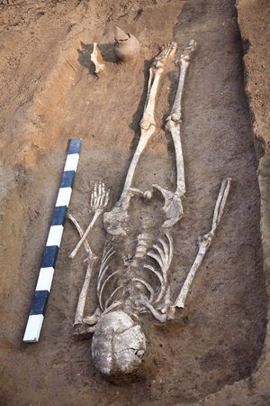 Archaeological excavations. Human remains (bones of skeleton and skull) found in the tomb. Measure plank. Real digger process. Outdoors, copy space. Stock Photo