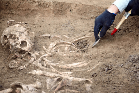Archaeological excavations. The archaeologist in a digger process. Close up hands with knife and brush conducting research on human bones, part of skeleton and skull in the ground. Outdoors, copy space.