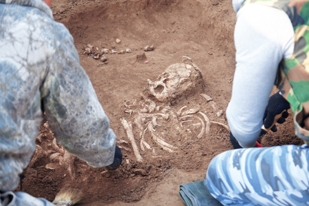 Archaeological excavations. Two archaeologists in a digger process. Close up hands with tools conducting research on human bones, part of skeleton and skull in the ground. Outdoors.