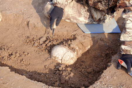 Archaeological excavations. The archaeologist in a digger process. Close up hands with knife and brush conducting research on human bones, part of skeleton and skull in the ground. Outdoors, copy space. Imagens