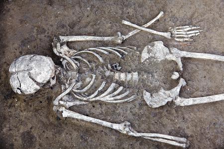 Fouilles archéologiques. Les restes humains (squelette avec crâne) sont à moitié dans le sol. Véritable processus de recherche scientifique. À l'extérieur, copiez l'espace. Banque d'images