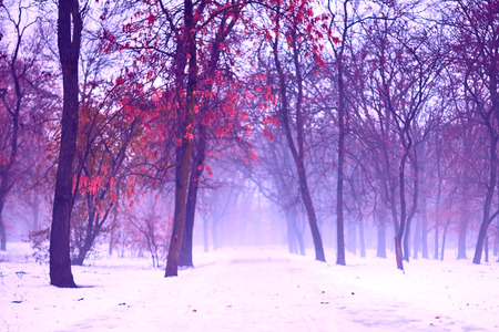 Creepy and foggy winter landscape in snowy park, with abandoned path. Moody, gloomy, dull, romantic atmosphere of faded nature, in violet colors . Outdoors, selective focus, copy space.
