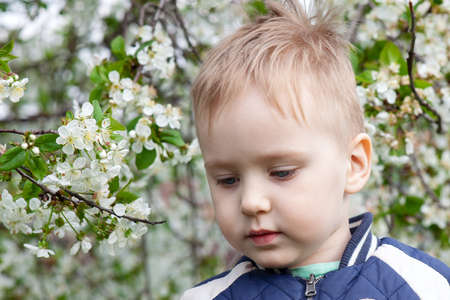 Close up portrait of cute sad baby boy with blond hair in cherry blossom garden. Allergy illness concept or displeased emotions. Outdoors, copy space, green and white spring flowers background. Imagens