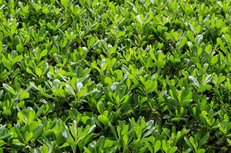 Green leaves Фото со стока