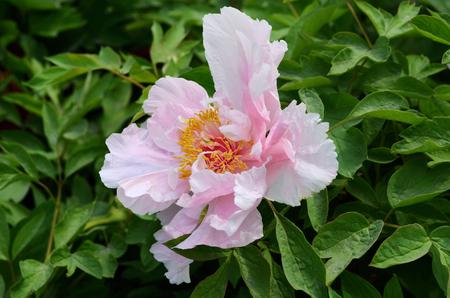 Flower Фото со стока - 39606171