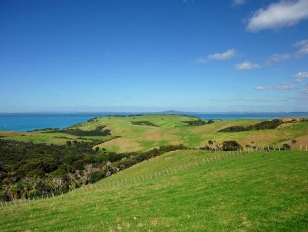regional: Colinas de Shakespear Regional Park, cerca de Auckland