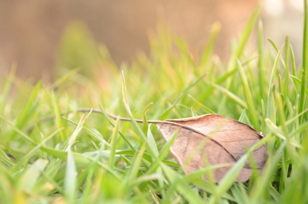 fallen leaf in natural grass right photo