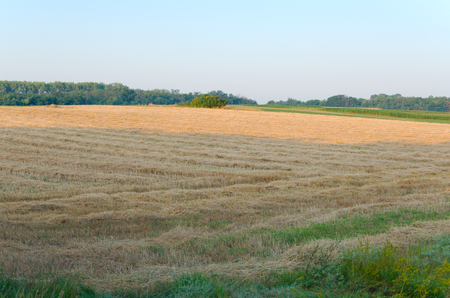Land after Wheat Harvest in the Morning photo