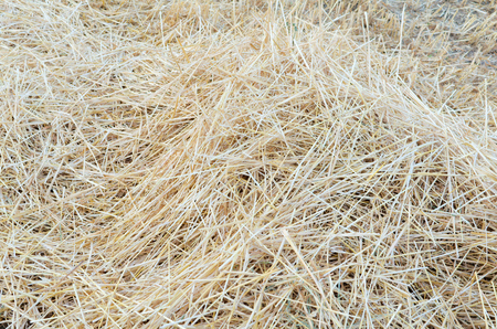 jumbled: Pile of Straw on the Field after Wheat Harvest Stock Photo