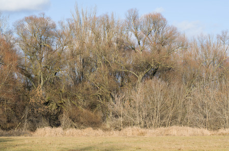impervious: Jungle of Branches in a Winter Floodplain Forest