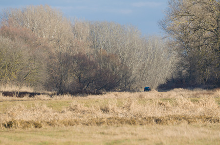 floodplain: Lonely Dark Green Car in the Winter Floodplain Forest