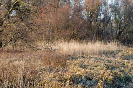 impervious: Winter Floodplain Forest with Dried Reeds at Sunset