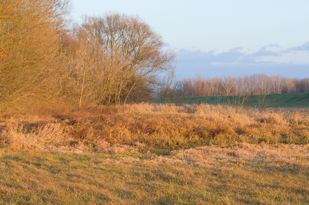 floodplain: Orange Colored Floodplain Forest at Sunset in Winter