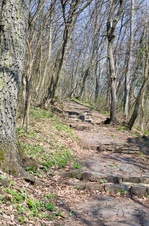 empedrado: Pavimentada Bosque Camino en la primavera Vertical