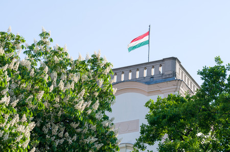 buckeye: Hungarian Flag in the Tower with Flowering Buckeye Tree