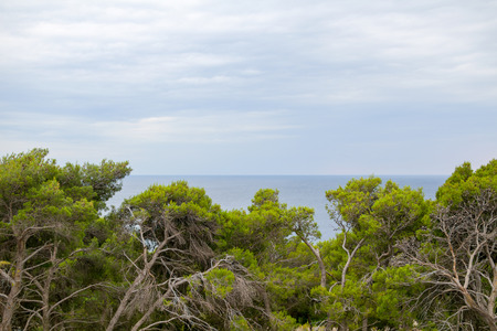 gnarled: Gnarled Trees and Blue Sea with Overcast Sky