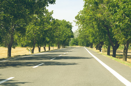 midday: Walnut Tree Lined White Paint Asphalt Road at Summer Midday Stock Photo