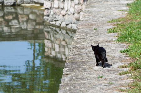 midday: Single Black Cat Goes Fishing to River at Midday