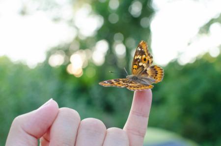 little finger: Freyers Purple Emperor Butterfly on Little Finger