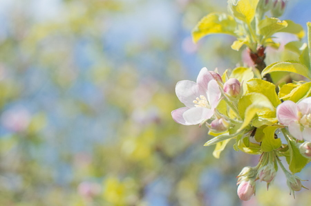 Blooming tree with small pink flowers closeup stock photo picture blooming tree with small pink flowers closeup stock photo 88850190 mightylinksfo