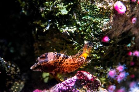 Oceanario of Lisbon, aquarium large collection of marine species.Portugal Europe