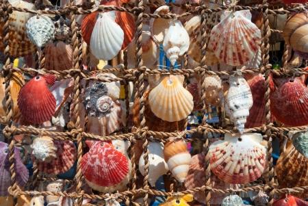 shell pattern: Sea shells on fishing net Stock Photo