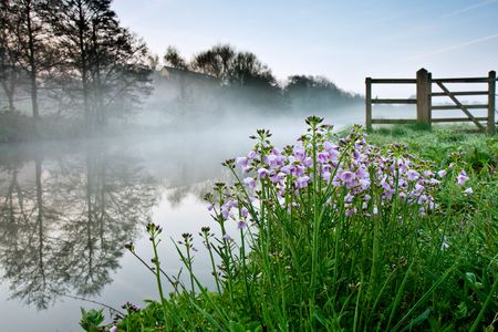 A crop of pink wild flowers growing by the side of a mist covered river.  The shot was taken just before dawn by the River Wey in Surrey, UK. photo