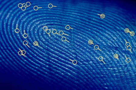 minutiae: A blue fingerprint overlayed with biometric minutiae point symbols.  These are the symbols used by biometric searching software to match fingerprints. Stock Photo