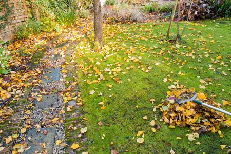 A small garden lawn in the process of having fallen autumn leaves raked into a tidy pile. photo