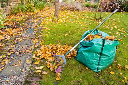 A rake and sack of collected autumn leaves in a small garden. photo