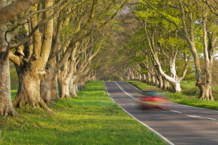 A motion blur obscured car drives down a road between an avenue of trees in Dorset, England. photo