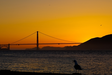 san francisco golden gate bridge: The San Francisco Golden Gate Bridge with the sun setting behind it   A silhouette of a sea bird in the foreground adds a bit of interest