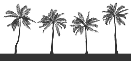 Set of silhouettes of palm trees on white isolated background. Hand drawn realistic contour. Template for printing and design of T-shirt, brochure, poster in tropical style. Vector illustration. EPS10
