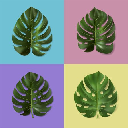 Set of different green monstera leaves isolated on colorful