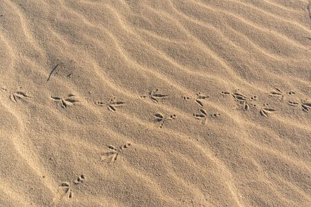 Birds footprints in the sand shot at bright day