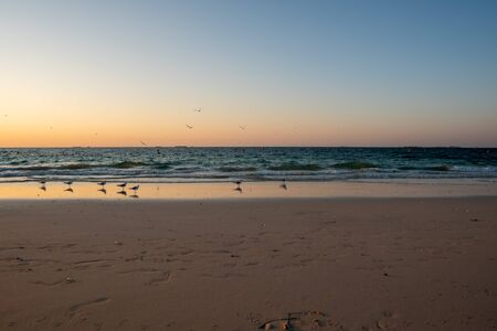 Seagulls standing at the beach close to see waves waiting for sunset. Wild nature. 版權商用圖片